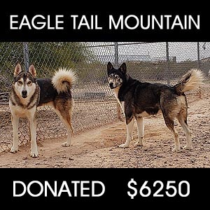 Wolf Dog Sanctuary Support - $6250