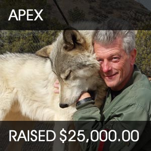 raised for apex