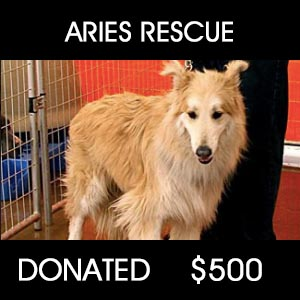 donated to Aries Rescue - Pets Return Home