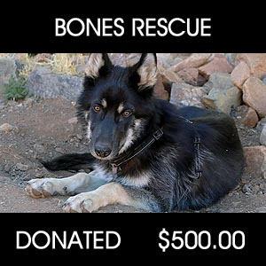 donated to Bones Rescue