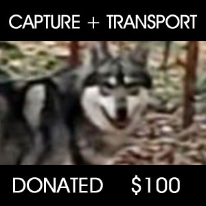 Capture Transport - $100
