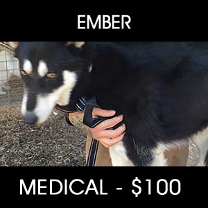 Medical Assistance for Ember