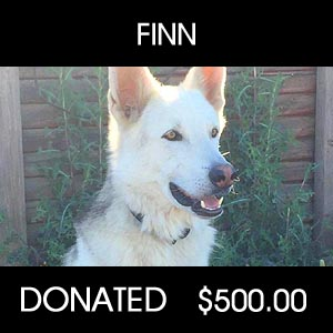 donated to Finn Rescue DNA - Pets Return Home