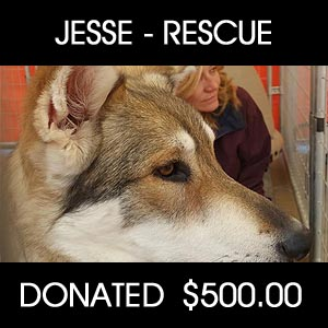 raised for Jesse - Pets Return Home