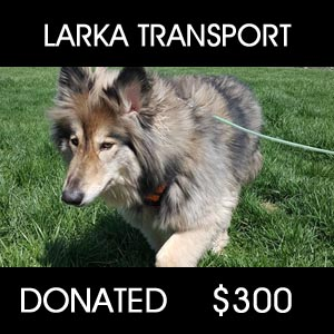 Wolf Dog Rescue Transport - $300