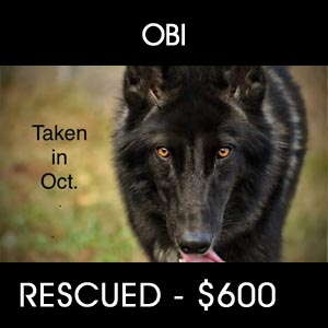 OBI Dog Rescue - $600