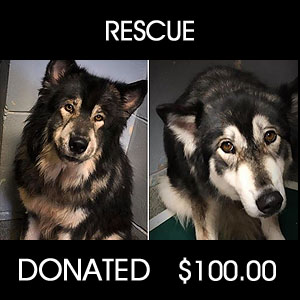 donated towards rescue of 120 dogs and wolf dogs