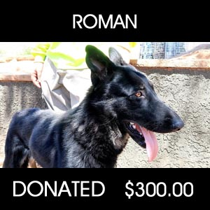 donated to Roman Rescue - Pets Return Home