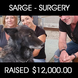 raised for Sarg